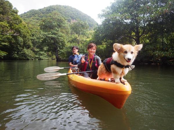 西表島今日のカヤック犬2018 モフくんの大冒険!