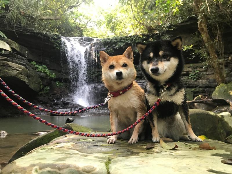 西表島 今日のカヤック犬2019 ナツとフユの大冒険